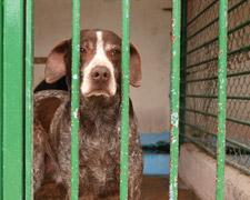 Spenden statt schenken: Was macht einen seriösen Tierschutzverein aus?