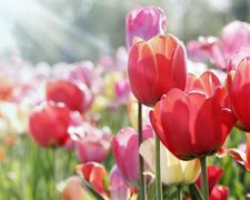 Die Bedeutung der Blumen - eine besondere Sprache